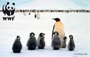 WWF (Photo by Fritz Polking)